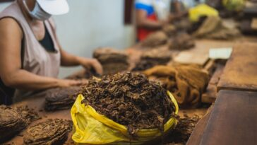 How Cigars are Made